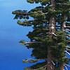 Tree Panorama