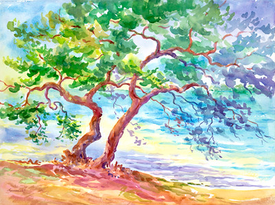 Bay Mangrove