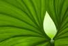 Palm Leaf Study