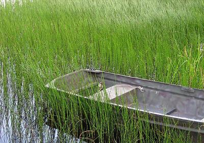 ed's boat in reeds
