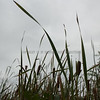 Up to the cattails in the early fall image two-2160
