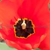 Down into the tulip