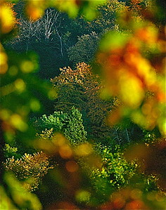 9  Autumn tints, Boxhill