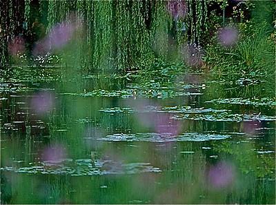 40  Monet's garden 1