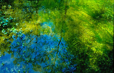 21  Reflections in a small pond