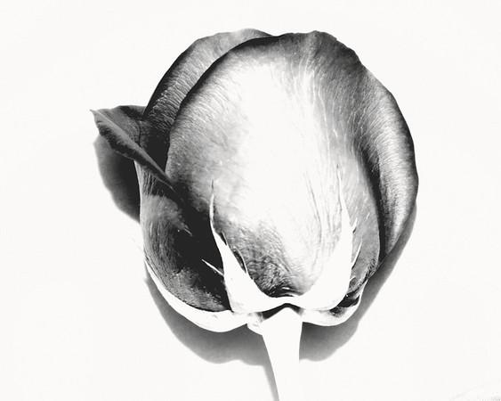 Bloom'n Black and White