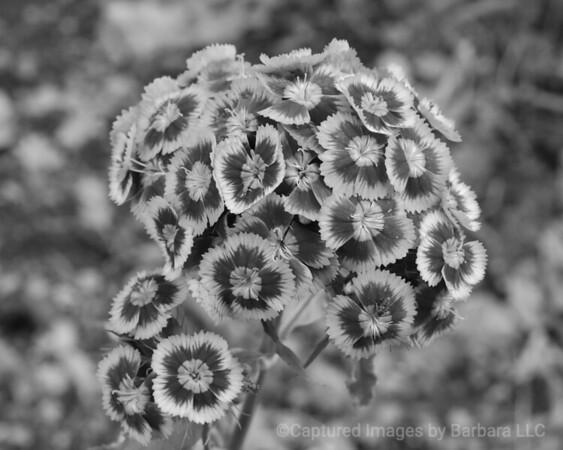 Cluster Bloom