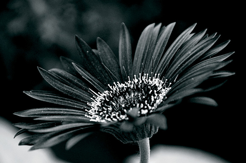 photography by Beata Obrzut