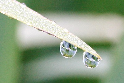 A garden in a drop or two