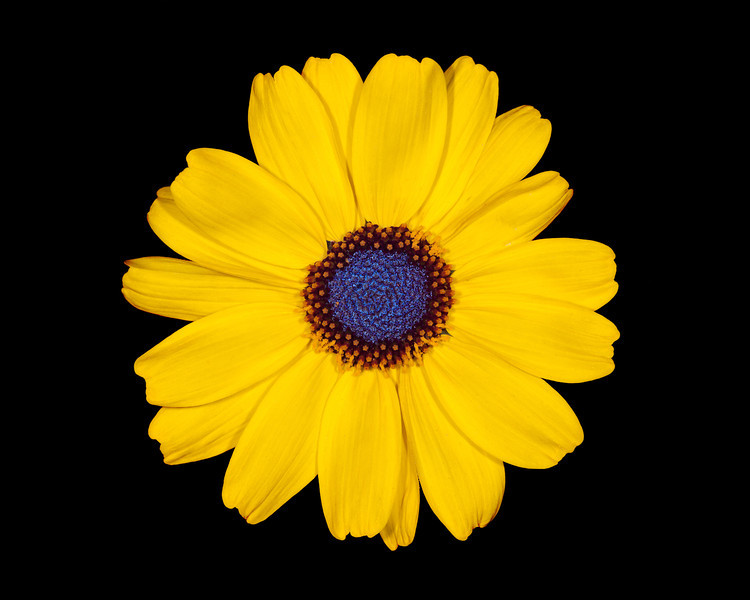 """Simple Sunflower"""