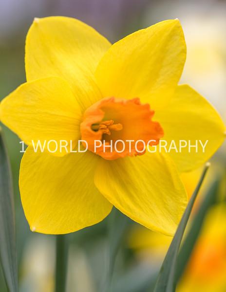 20190416Spring Flowers_Cantigny 4_17_19071--80.jpg