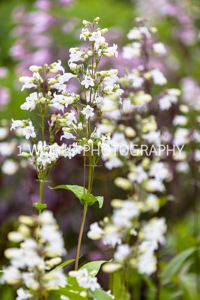 201906162019_6 Cantigny Flowers177--179.jpg