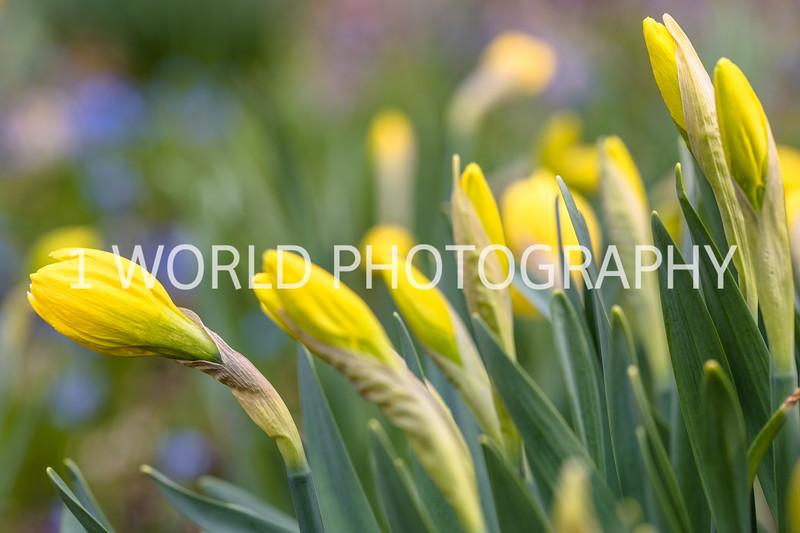 20190416Spring Flowers_Cantigny 4_17_19067--79.jpg