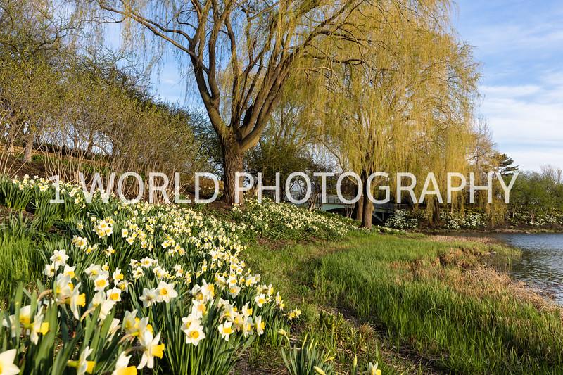 CBG In Spring '17-353-32.jpg