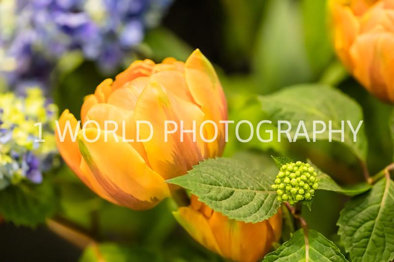 Navy Pier Chicago Flower and Garden Show-169-53.jpg