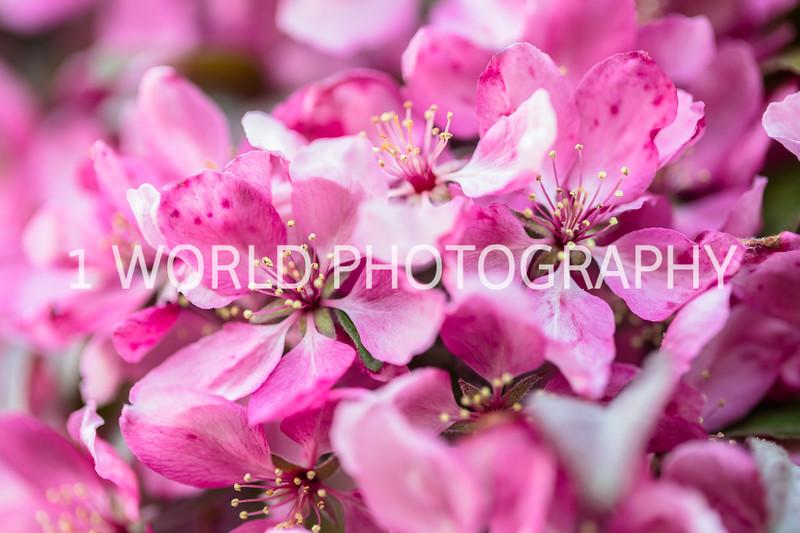 201905152019 Neighborhood Blossoms010--148.jpg