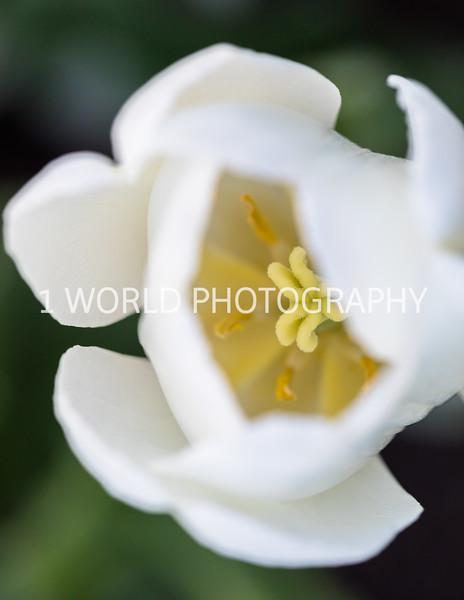 201905102019_Cantigny_Spring350--132.jpg