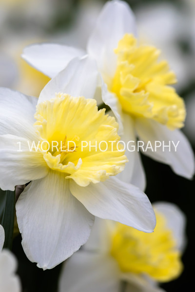 20190416Spring Flowers_Cantigny 4_17_19127--85.jpg
