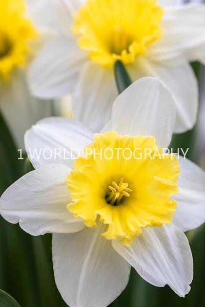 20190416Spring Flowers_Cantigny 4_17_19130--86.jpg