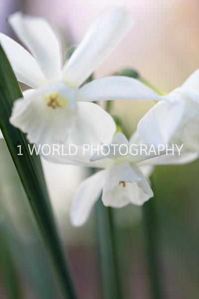 201905102019_Cantigny_Spring081--121.jpg
