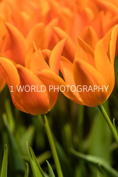 Navy Pier Chicago Flower and Garden Show-115-2-58.jpg