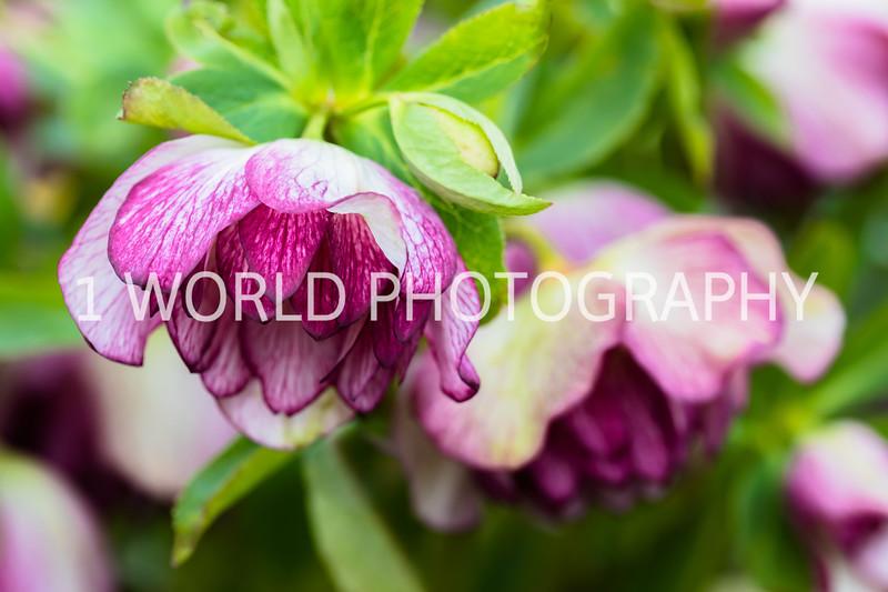 20190416Spring Flowers_Cantigny 4_17_19184--20.jpg