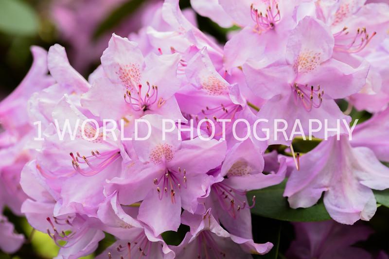 202006042020_6 Spring012--3.jpg