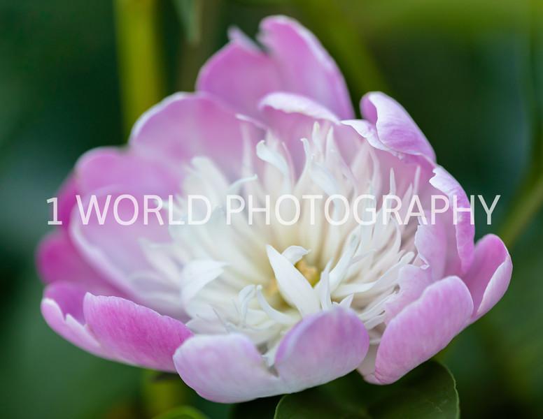 202006152020_6_15 Flowers118--2.jpg