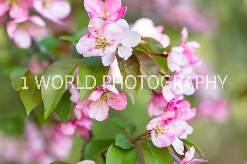 201905102019_Cantigny_Spring021--118.jpg