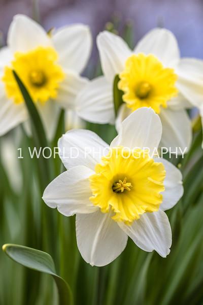 20190416Spring Flowers_Cantigny 4_17_19064--78.jpg