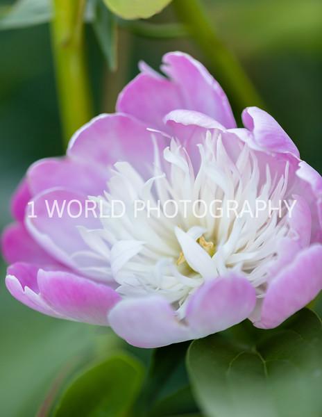 202006152020_6_15 Flowers122--15.jpg