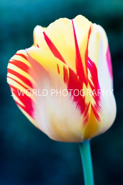 Cantigny Spring '17-524-44.jpg