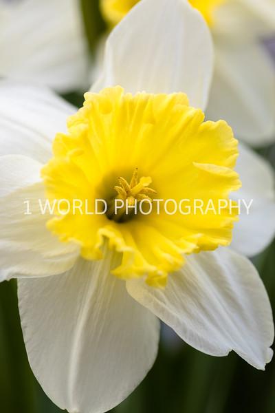 20190416Spring Flowers_Cantigny 4_17_19063--77.jpg