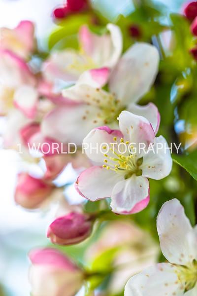 201905102019_Cantigny_Spring043--119.jpg