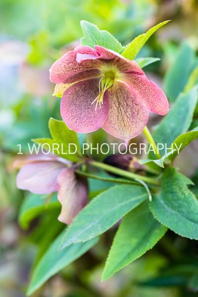 Cantigny Spring '17-419-42.jpg