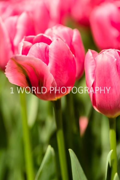 Navy Pier Chicago Flower and Garden Show-54-2-9.jpg