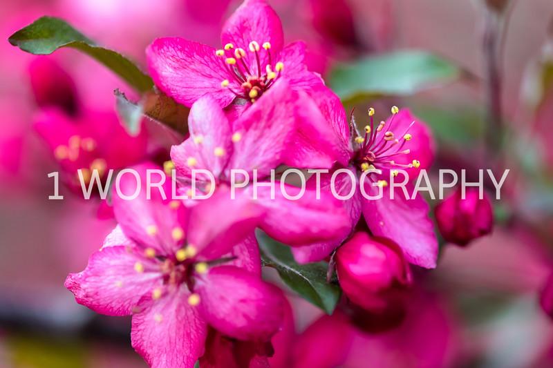 202005152019 Spring_Neighborhood044--39.jpg