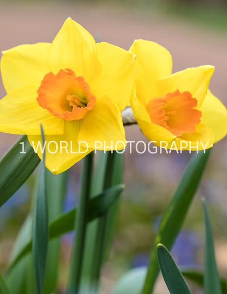 20190416Spring Flowers_Cantigny 4_17_19084--81.jpg