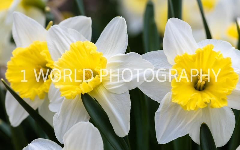 20190416Spring Flowers_Cantigny 4_17_19119--83.jpg