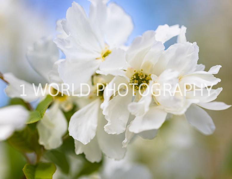 201905102019_Cantigny_Spring066--120.jpg