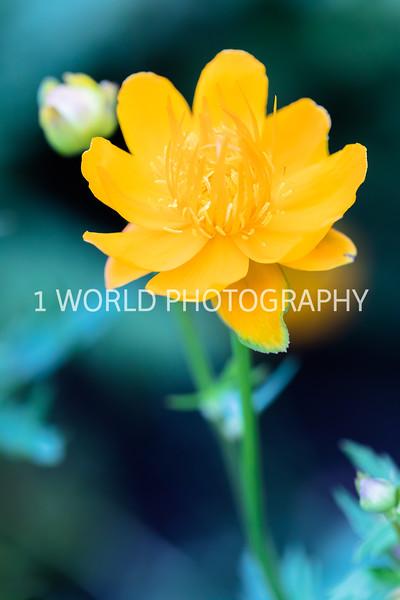 Spring Flowers 2018_Cantigny Flowers_Cantigny-126-16.jpg