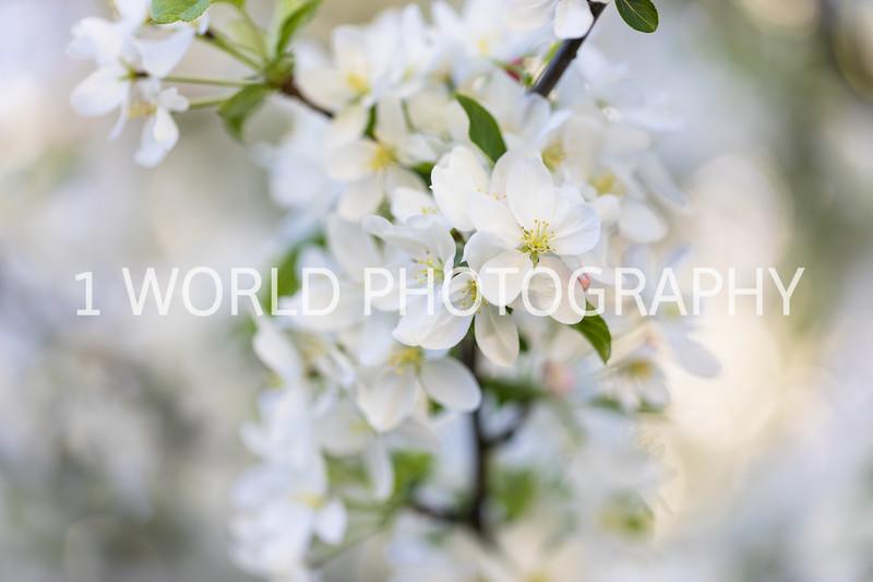 Local Spring '17-18-39.jpg