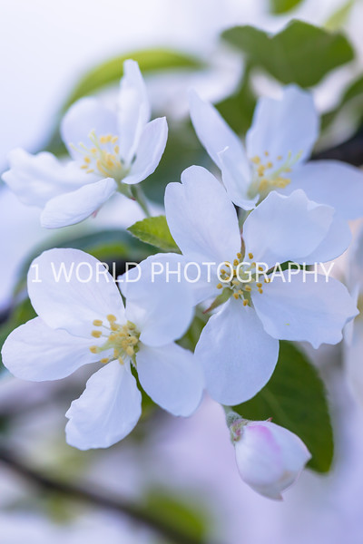 201905152019 Neighborhood Blossoms105--155.jpg