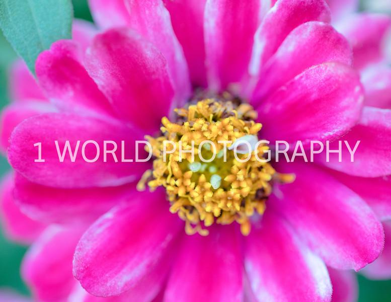 Spring Flowers 2018_Cantigny Flowers_Cantigny-98-24.jpg