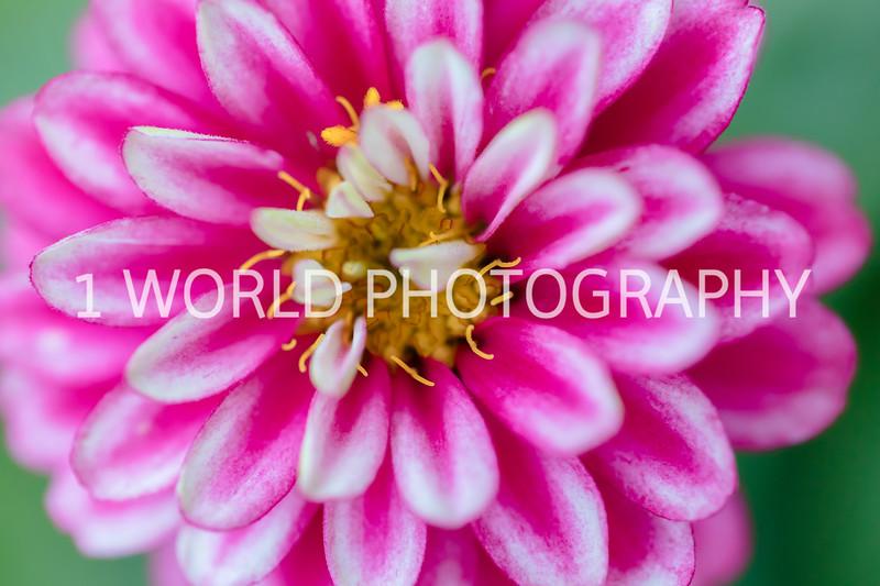 Spring Flowers 2018_Cantigny Flowers_Cantigny-96-14.jpg