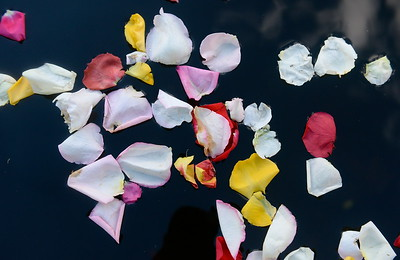 "Flower petals are seen in Sycamore Pool during the ""Flowers on the Creek"" Domestic violence victims remembrance at the One Mile Recreation Area of Bidwell Park in Chico, Calif. Thursday, Oct. 4, 2018.   (Bill Husa -- Enterprise-Record)"
