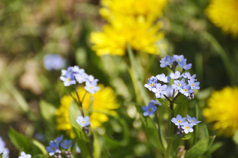 __back yard flowers 050309 8 DSC5642
