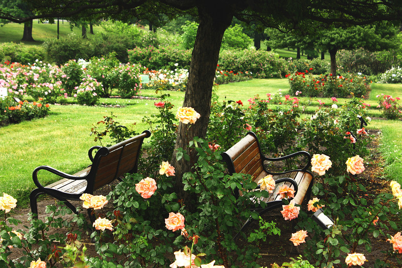 A place to sit and think and smell the roses, Maplewood Park, Rochester NY.