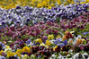 __Highland Park blossoms 050309 10 DSC5678