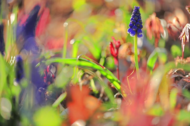 Flowers, wild and garden.